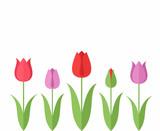 Tulip. Set - 79077627