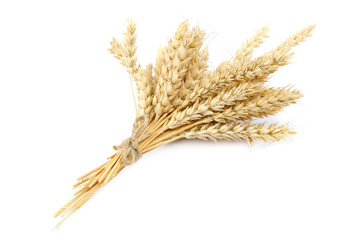 Sheaf of wheat ears on white background.