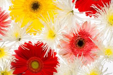 Flowers art closeup