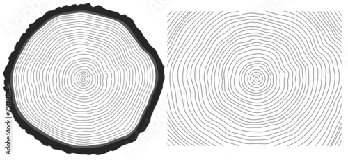 Vector black and white saw cut pine tree trunk and tree rings - 79078240