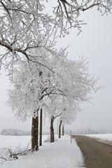 Winter, Schnee, grau
