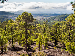 Beautiful landscape with trees and clouds. Tenerife
