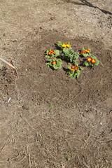 Gardener and flower bed