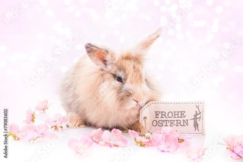 Easter rabbit - 79083602