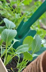 jeunes plants de légumes