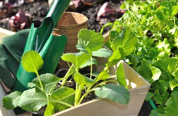 plants de légumes prêts à être plantés