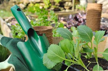 plants de légumes dans potager