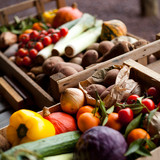 vegetable market garden