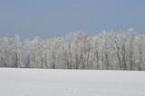 schneeweißer Wald im Winter