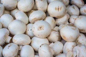 Fresh champignons in the market