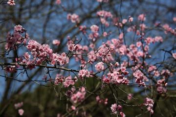 prime sbocciature di fiori primaverili e allergie