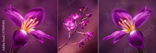 Tulipany i Orchidea