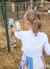 Little girl feeding goat on the farm.