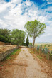 canvas print picture - Gravel road with trees in park.