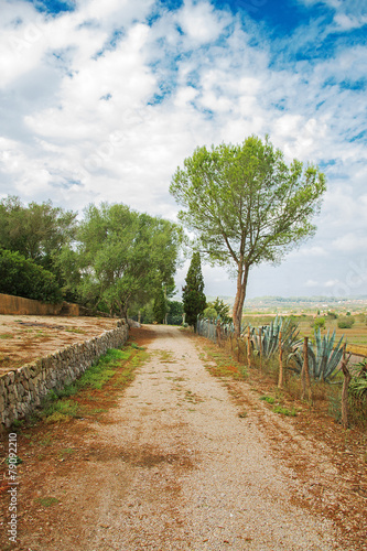 canvas print picture Gravel road with trees in park.