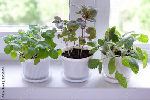 herbs on window