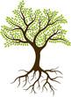 tree silhouette - 79097491