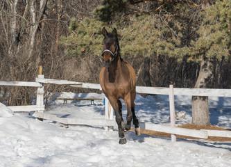 seedy horse
