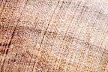 Wood texture close up
