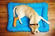 Dog with broken leg - 79107281