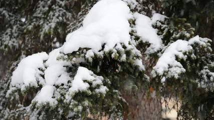 Snowfall on a pine