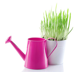 Fresh green grass in small metal bucket and decorative watering
