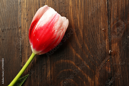 canvas print picture Tulip flower on wooden background
