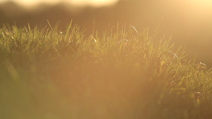 Grass blowing in the breeze during sunset