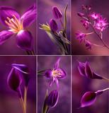 Kwiaty w fioletach
