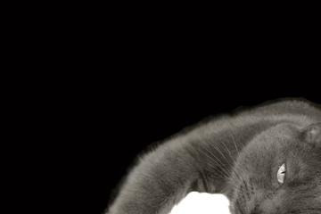 Katze (s/w)