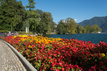 Flowers in the Lugano's park