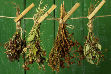 Herbs in bunches drying on a rope
