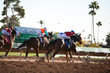 Horse Racing - 79119870
