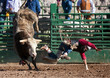 Leinwanddruck Bild - Bull Rider