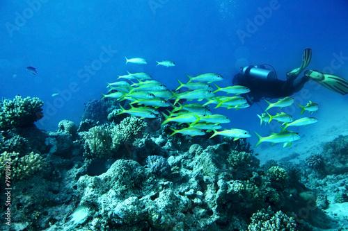 Deurstickers Duiken Scuba diver in water.