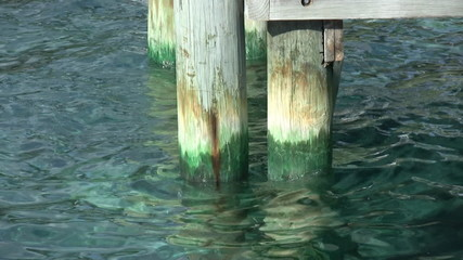 Pier Pilons with Algae