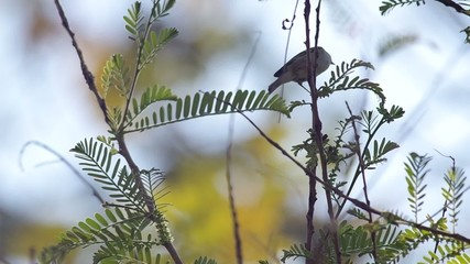Footage of little bird is eating young leaf
