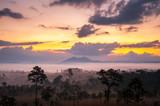 sunrise in savanah meadow