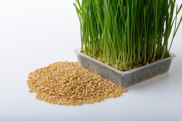 wheat grass and wheat grains