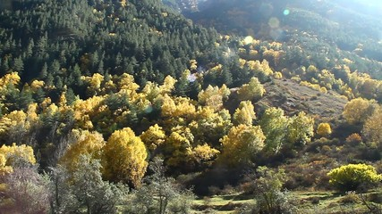 Beautiful autumn landscape with golden trees and the mountains