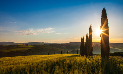 Field of wheat and cypresses at sunrise, Tuscany