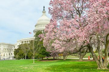 Washington DC - Capitol Building in Spring