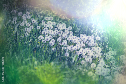 Spring meadow - 79137023