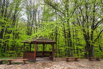 森のレストハウス