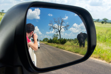 Safari in Africa, man in car looking at elephant