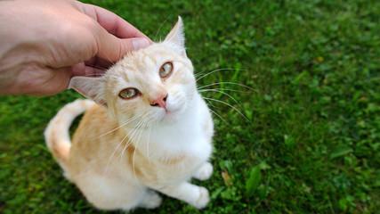Hand Petting a Cat (16:9 Aspect Ratio)