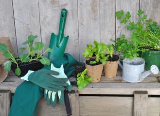 plants de salade et accessoires de jardinage