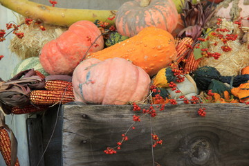 Assortment of pumpkins,squash and berries in wagon