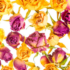 Beautiful dried colorful roses like as background is isolated on