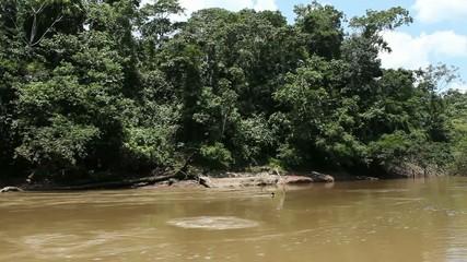 Traveling up Rio Shiripuno deep in the rainforest, Ecuad